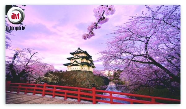 Những nét đặc trưng của Văn hoá Nhật Bản