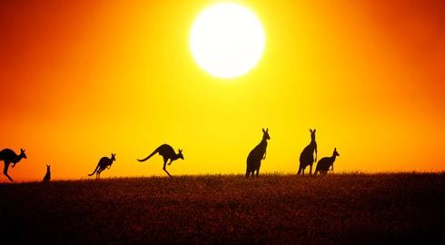 Úc- xứ sở Kangaroo
