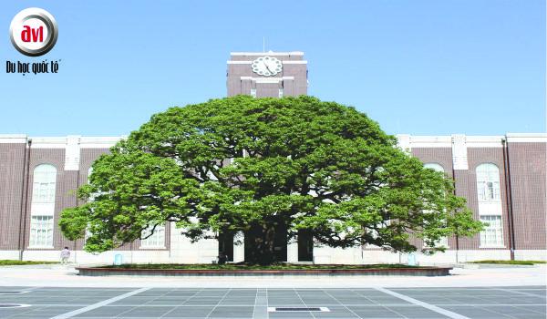 Đại học Kyoto – Trường Đại học hàng đầu Nhật Bản