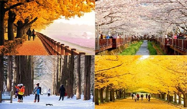 Đất nước xinh đẹp- một trong những lý do chọn du học Hàn Quốc