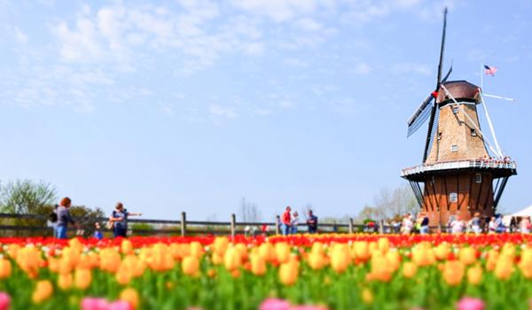 Hà Lan – Vùng Đất Vàng Cho Những Ước Mơ Du Học