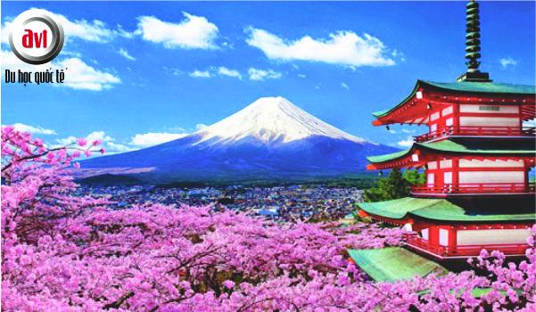 Biểu tượng nhật bản: núi phú sĩ và hoa anh đào
