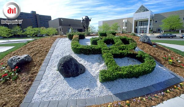 Đại học Buffalo có gì khác so với những trường còn lại?