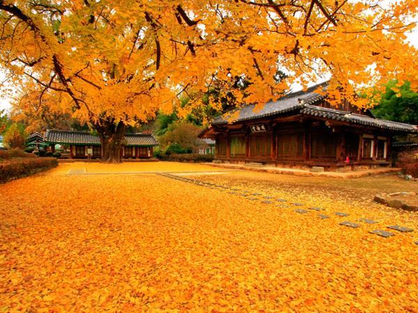 Khí Hậu Hàn Quốc vào mùa thu
