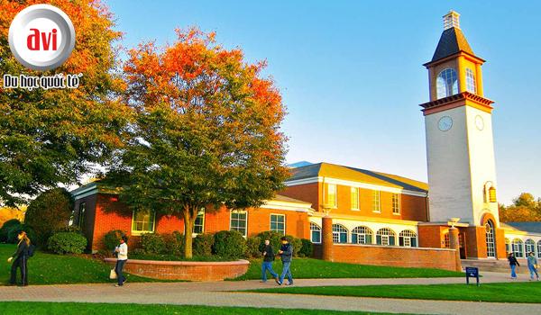 Xếp hạng của đại học Quinnipiac